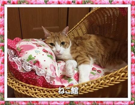 blog4_2016072015413436c.jpg