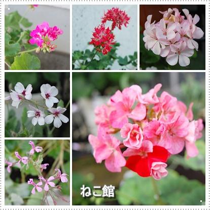 blog6_201607130914581bb.jpg