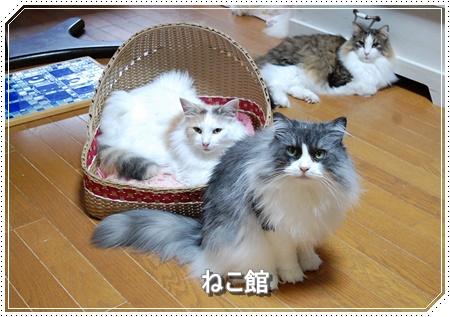 blog7_20160608184701a09.jpg
