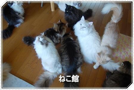 blog_20160517152632b74.jpg