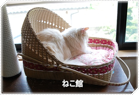 blog_20160608184636dcd.jpg