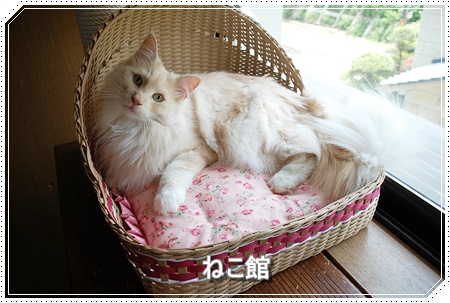 blog_20160608190355561.jpg