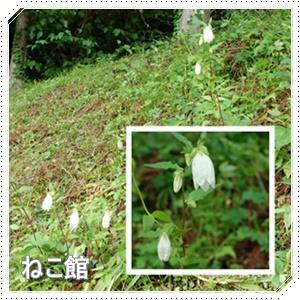 blog_201607050655368ad.jpg