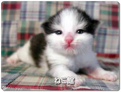 blog_2016071513023116c.jpg
