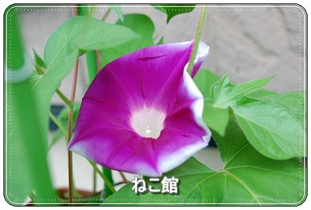 blog_201607290720027e3.jpg