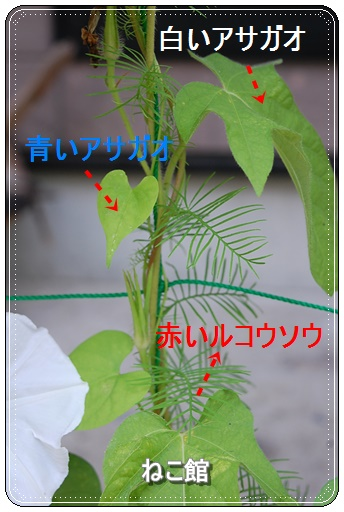 blog_20160729092202d46.jpg