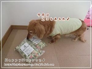 いぬなご野菜2