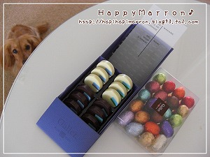 ベルギー和チョコ1