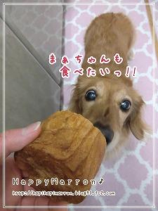 パンの缶詰3
