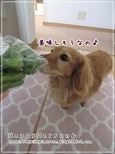 とっぺん野菜3