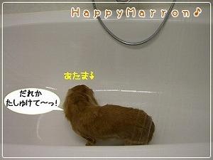 初お風呂3