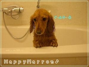 初お風呂4