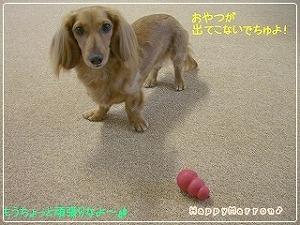 根性なし犬3
