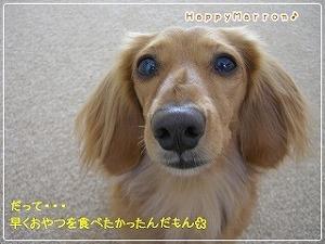 根性なし犬4
