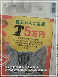 ペット広告2