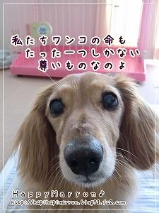 ペット広告3