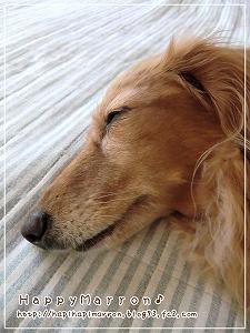 久しぶりのラグ昼寝3