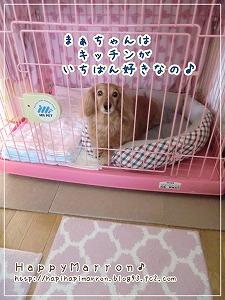ケージ生活4