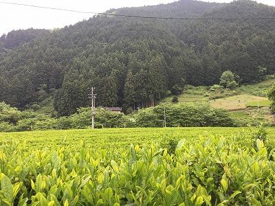 kiyosawasato (4)