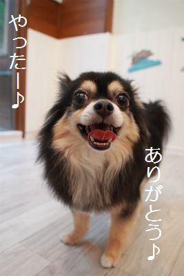 IMG_7011_2016070923460687c.jpg