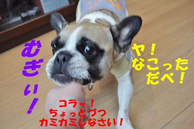 DSC_0006_201604261443257fb.jpg