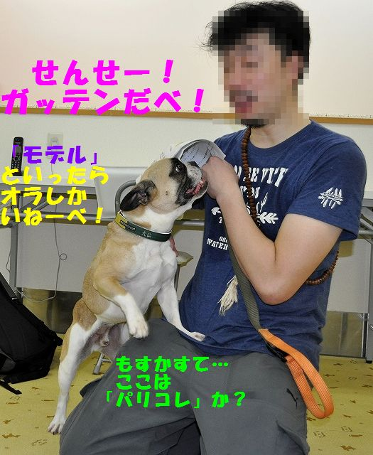 DSC_0007_201607261456332a5.jpg