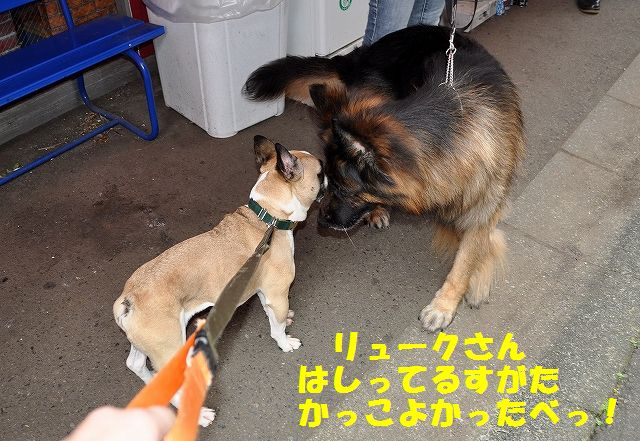 DSC_0047_20160726161314d83.jpg