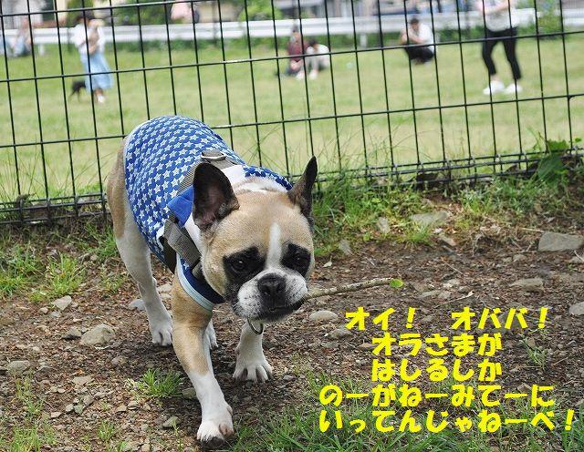 DSC_0084_20160510133319dc8.jpg