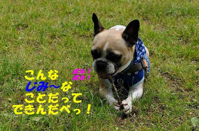 DSC_0086_2016051013332037f.jpg