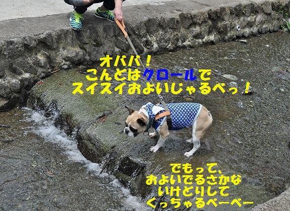 DSC_0104_2016051115105361c.jpg