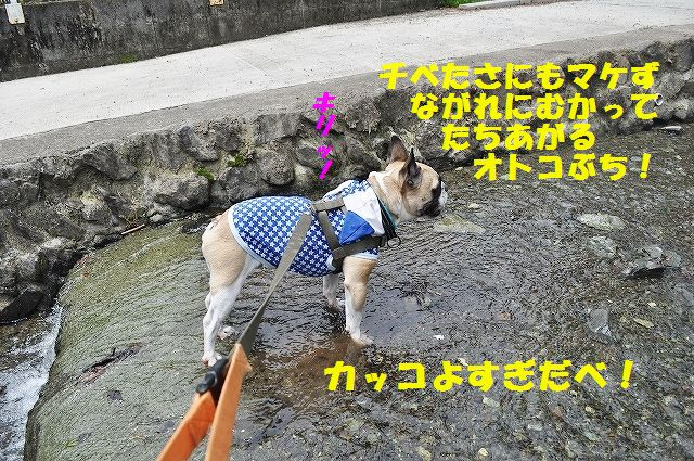 DSC_0111_20160511094419571.jpg