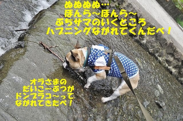 DSC_0113_201605111340448d1.jpg