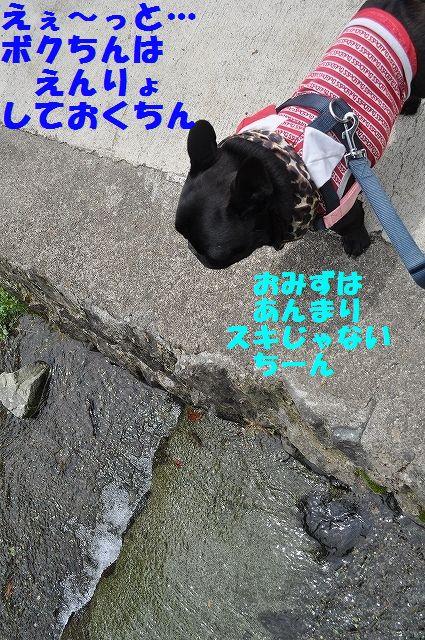 DSC_0116_20160511141851073.jpg