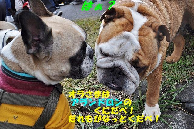 DSC_0129_201604131632164b1.jpg