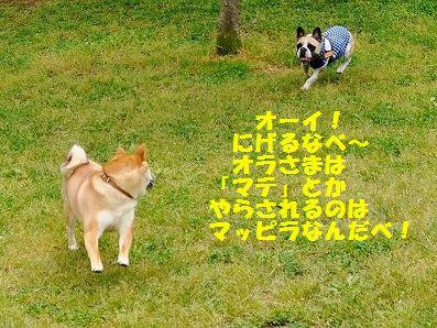 DSC_0144_201605101422342cd.jpg