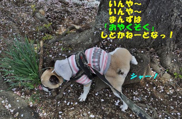 DSC_0268_201604121023074e0.jpg
