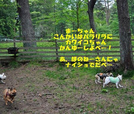 DSC_0283_20160524091707ecd.jpg