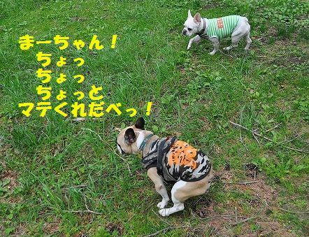 DSC_0290_201605181108160ff.jpg