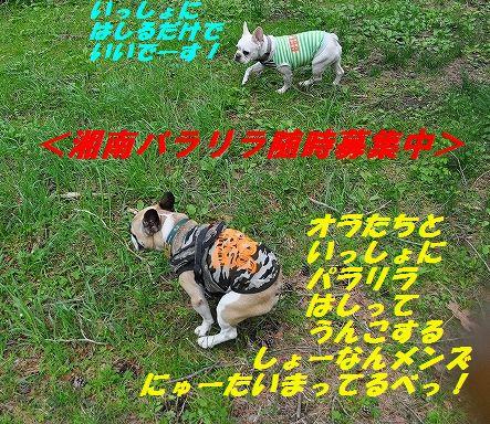 DSC_0290_20160524160550a50.jpg