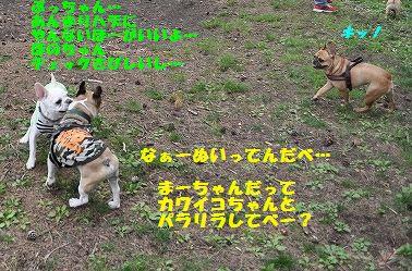 DSC_0293_201605240917107e1.jpg
