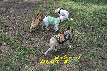 DSC_0295_201605240940468ed.jpg