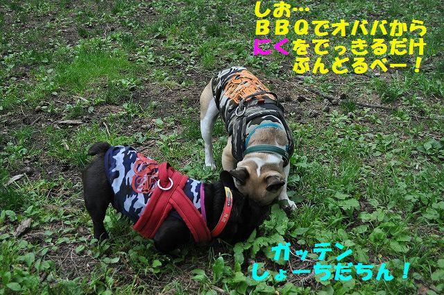 DSC_0298_20160520102748ab9.jpg