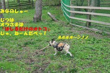 DSC_0303_2016052513032351e.jpg
