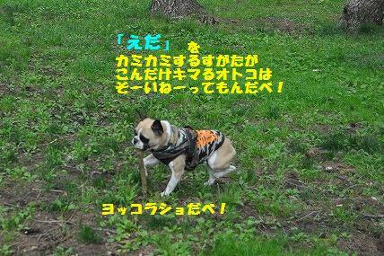DSC_0304_20160525130324fd4.jpg