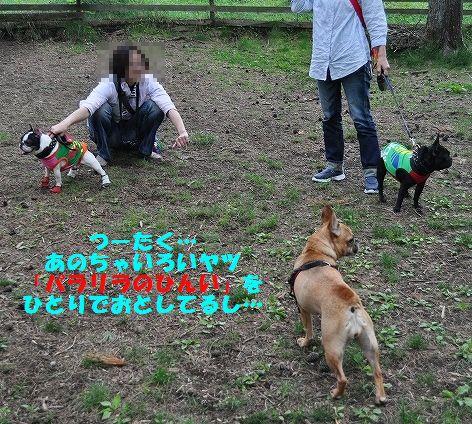 DSC_0323_20160524100616550.jpg