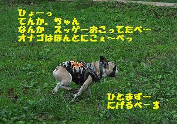 DSC_0326_2016052413061965a.jpg