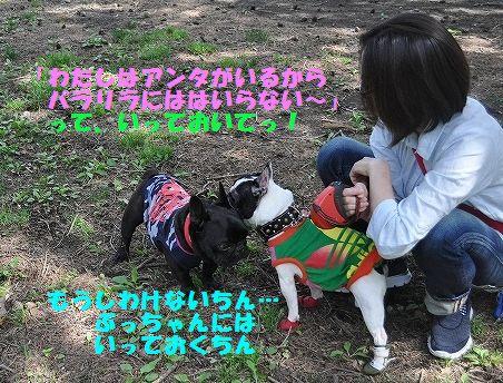 DSC_0341_20160524100617440.jpg