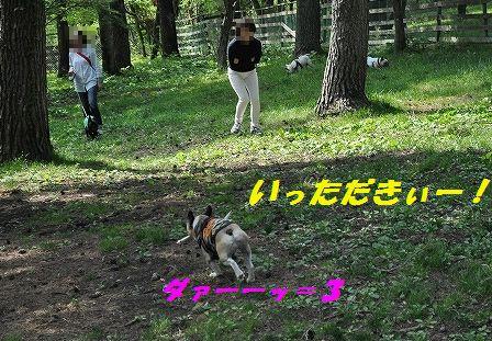 DSC_0359_20160525142355031.jpg