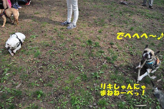 DSC_0366_20160525153842bb5.jpg