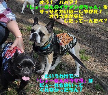 DSC_0398_20160524155412b11.jpg
